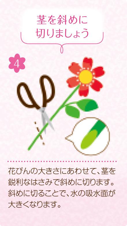 4.茎を斜めに切りましょう。花びんの大きさにあわせて、茎を鋭利なはさみで斜めに切ります。斜めに切ることで、水の吸水面が大きくなります。