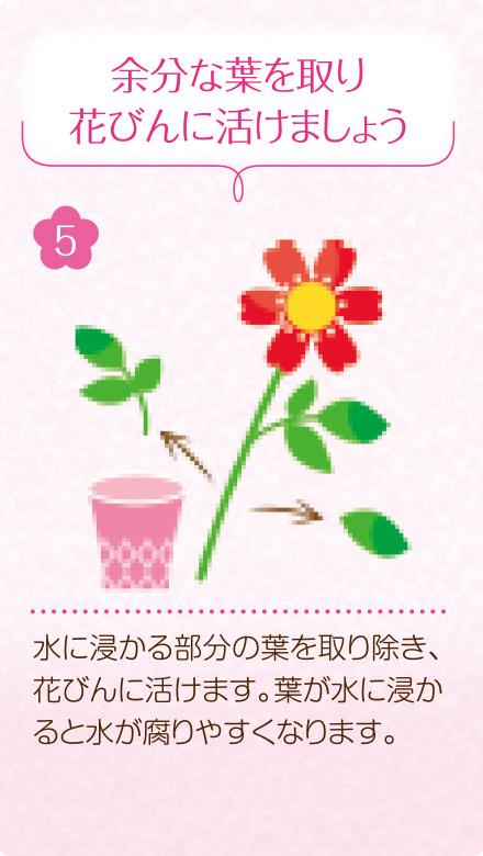 5.余分な葉を取り、花びんに活けましょう。水に浸かる部分の葉を取り除き、花びんに活けます。葉が水に浸かると水が腐りやすくなります。